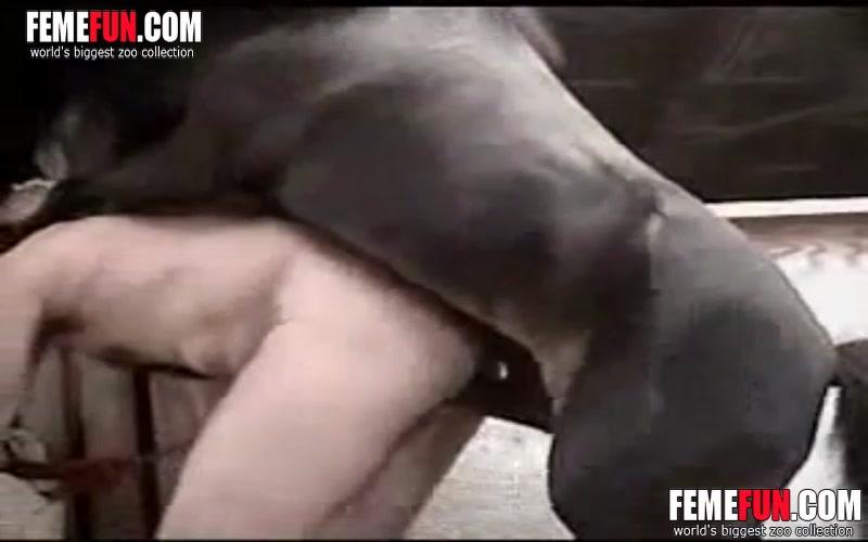 Porn man fuck horse Guy fucks