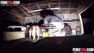 Hidden cam animal sex featuring an amateur wife and an aggressive mini horse--_short_preview.mp4
