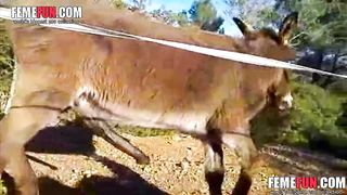 [ Donkey porn free ] Exclusive video of a mule getting a hardon in this zoo flick--_short_preview.mp4