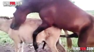 [ Donkey punch porn video ] Rare video of a horse fucking a mule on the ranch--_short_preview.mp4