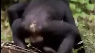 Porn movie with monkeys--_short_preview.mp4