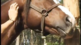 Sexy woman sucking on the horse's trunk--_short_preview.mp4